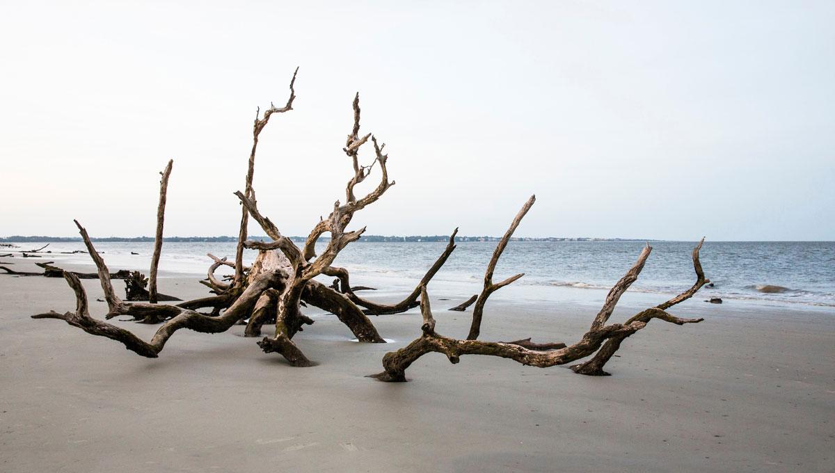 driftwood2-web.jpg