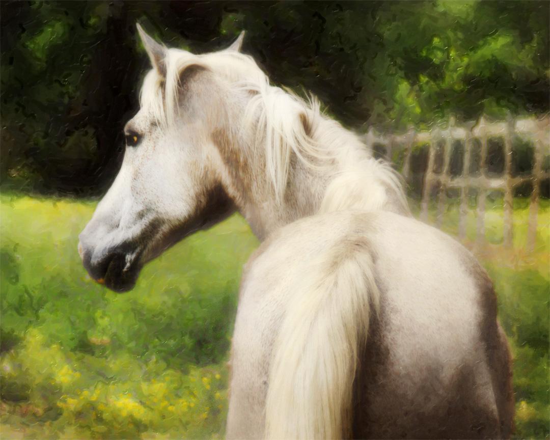 Equine Art 11