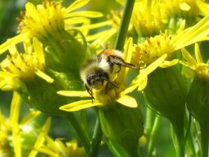 bee days work