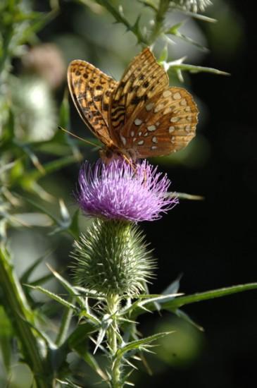 Triple Stack ... Butterfly