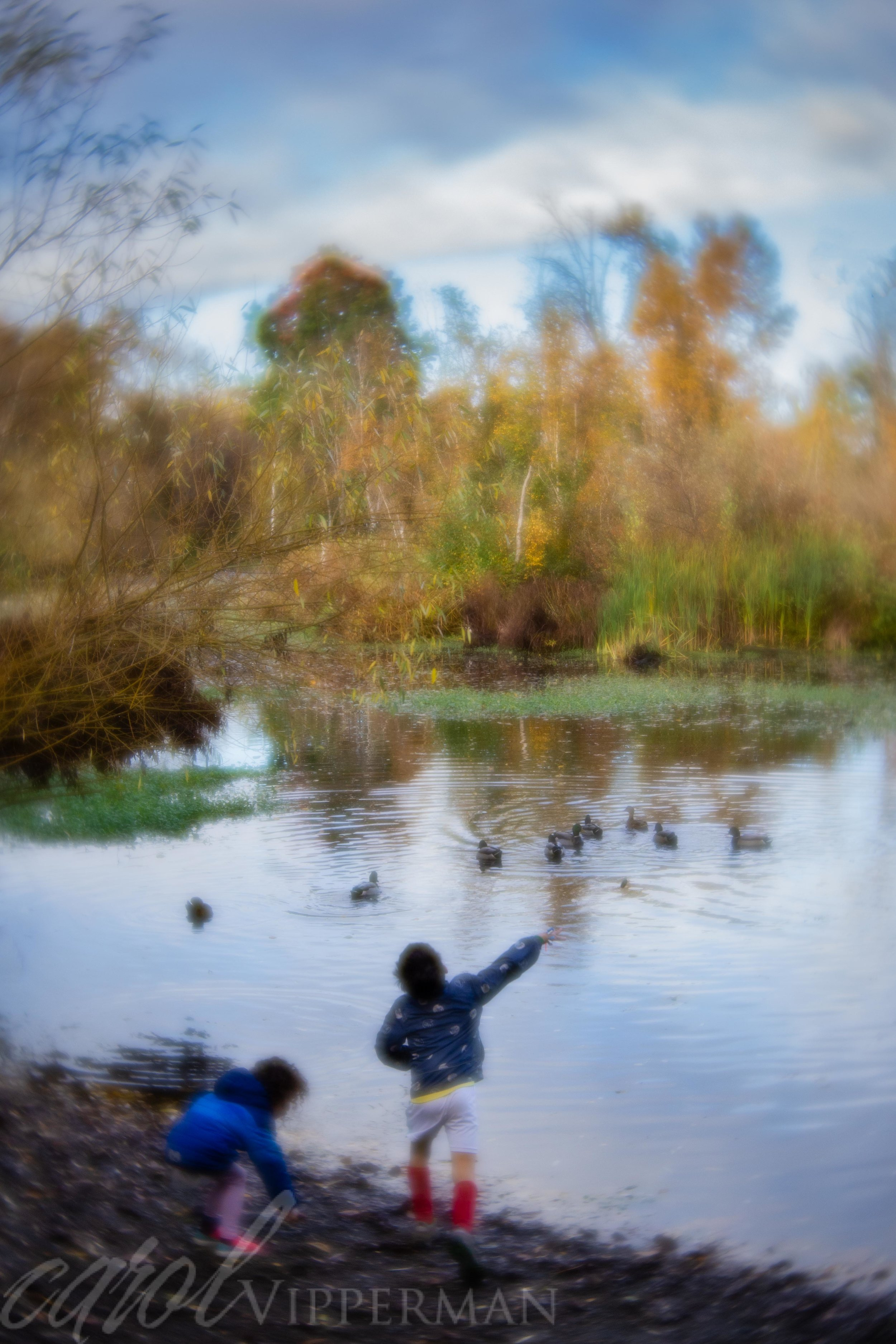 Children and ducks at play
