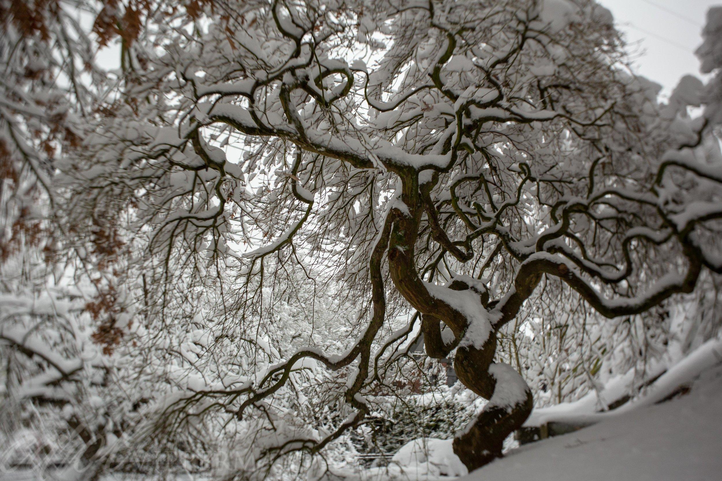 Dancing tree - Burnside35