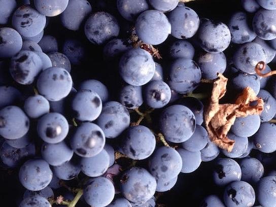 WINE CULTURES -