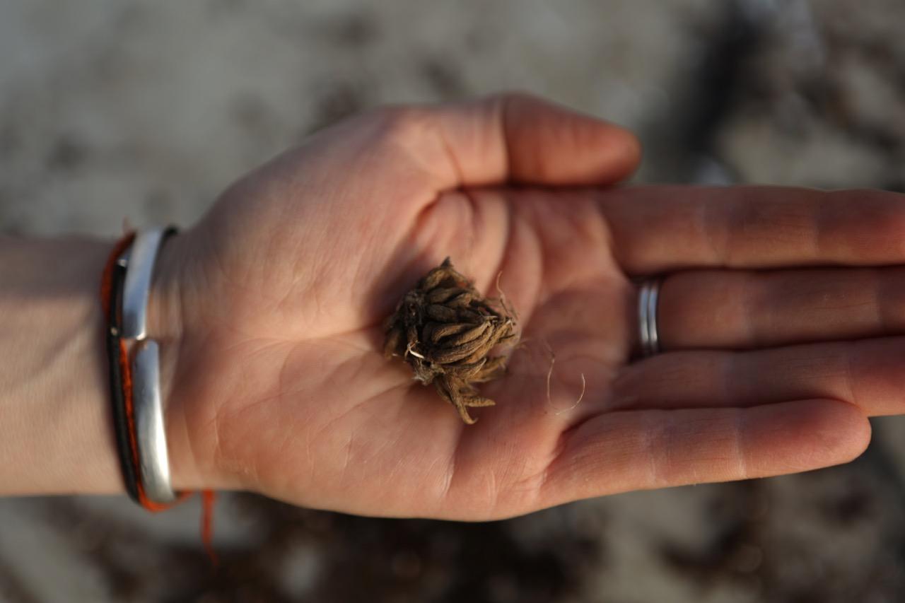 Floramama renoncules