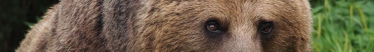 Flannery's Bear-Banner.jpg
