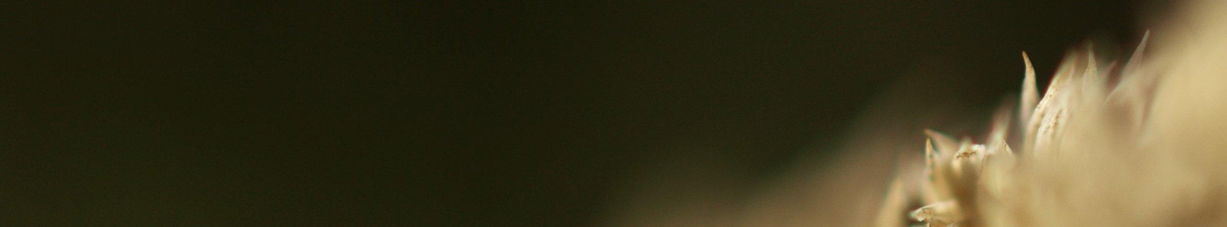 Divine Laboratory-Banner.jpg