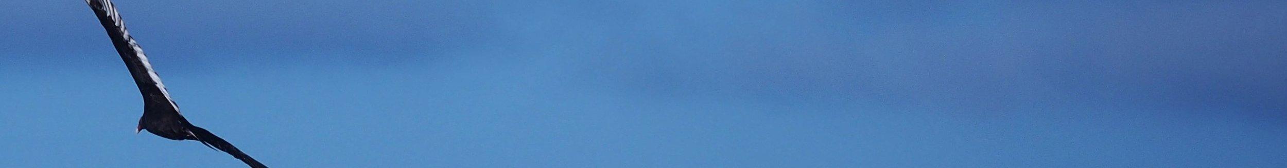 My Curious Ocean-Banner.JPG