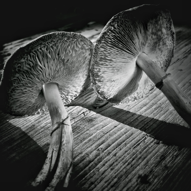 Mushrooms, Calgary, 2015