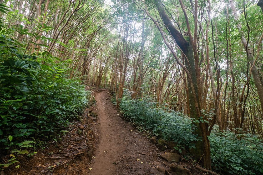 The start of the Waihee Ridge Trail. Because of the 1,500 ascent, you will be going uphill for the majority of the hike (until you make your way back down).