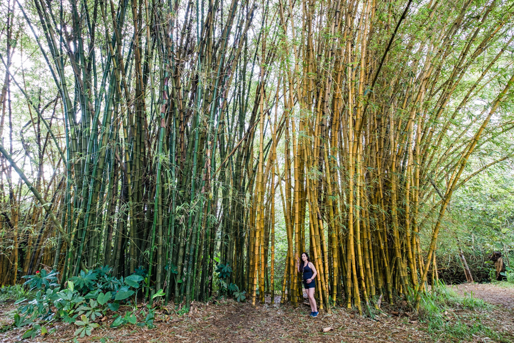 Bamboo in Twin Falls