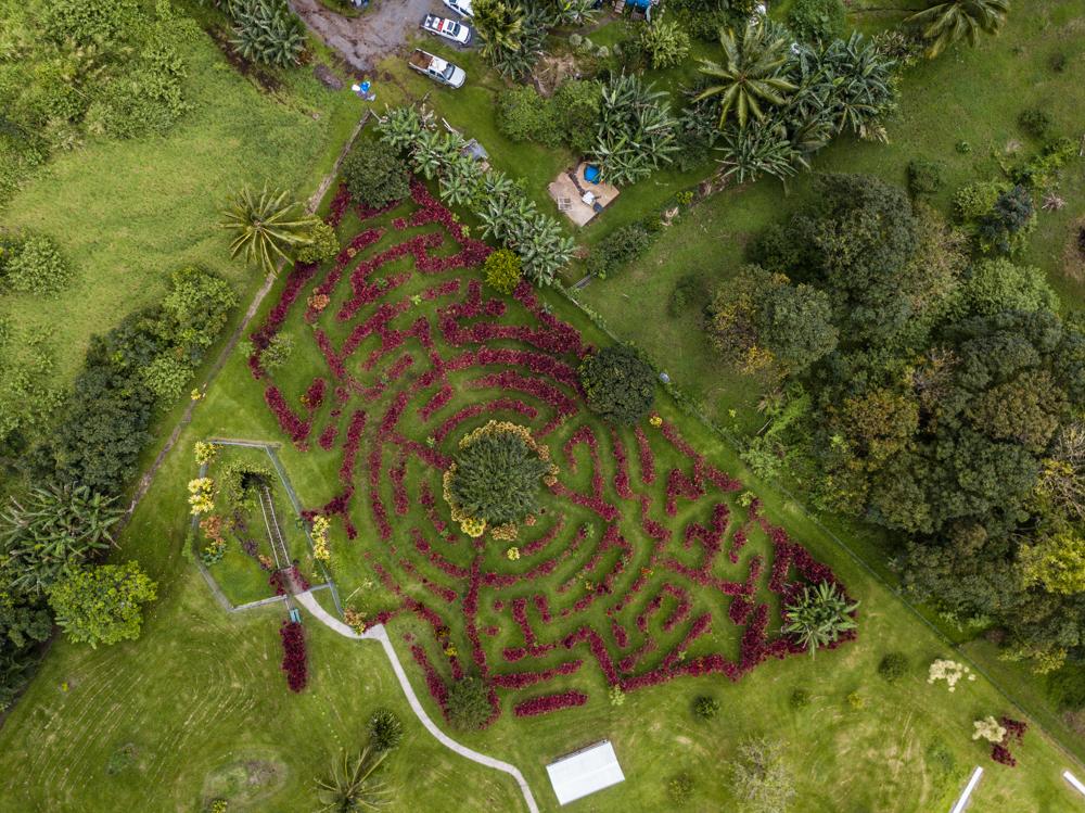 Red Ti Garden Maze