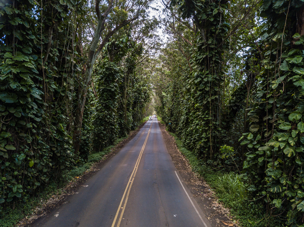 maluhia road tree tunnel kauai hawaii