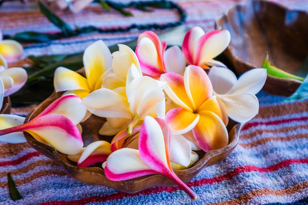 Beautiful plumeria flowers from our instructor's backyard.