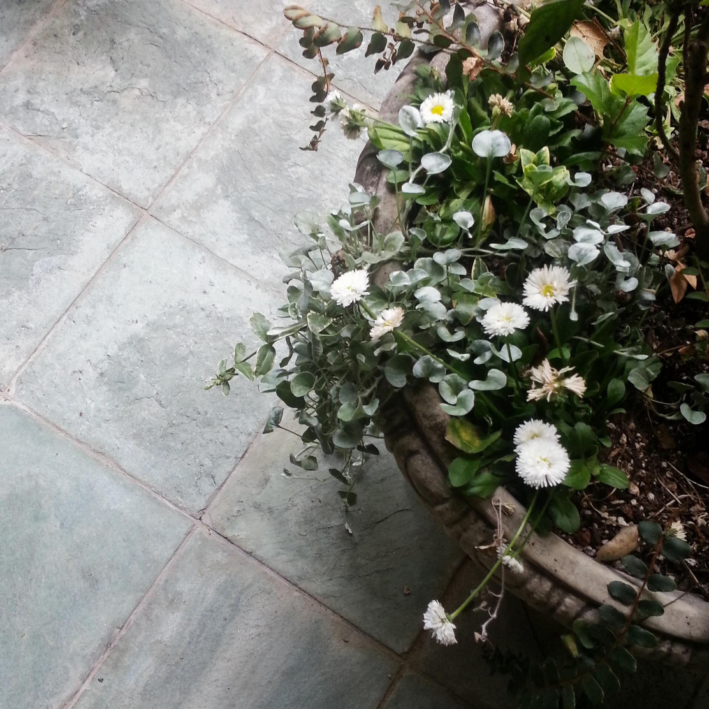 Flowerpot_insta
