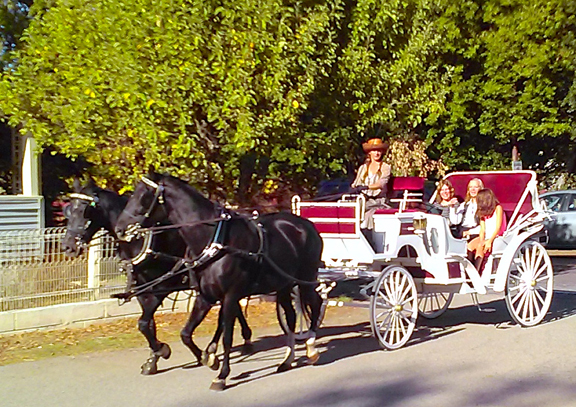 NHS Horse and Carriage.jpg