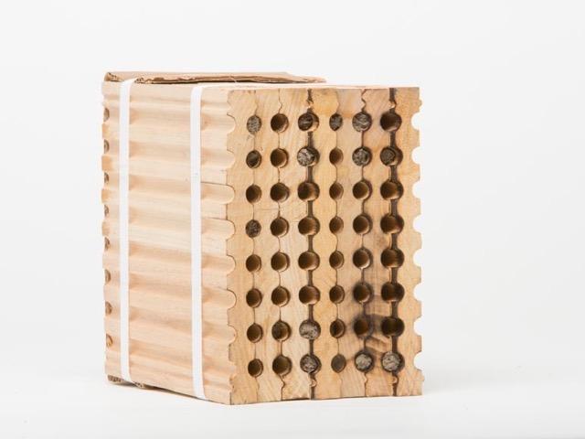 Bees-6477.jpg