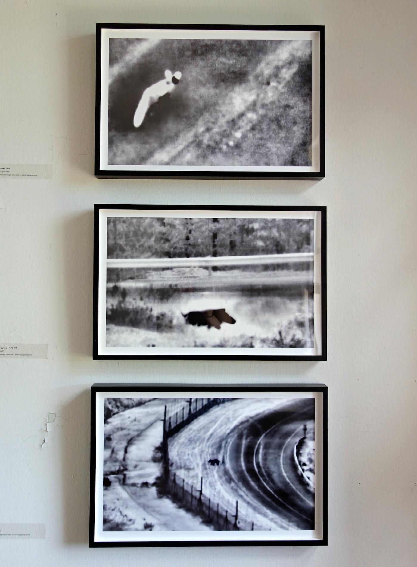 Surveillance footage stills of animals by Netta Laufer -  Installation at Governor's Island Art Fair