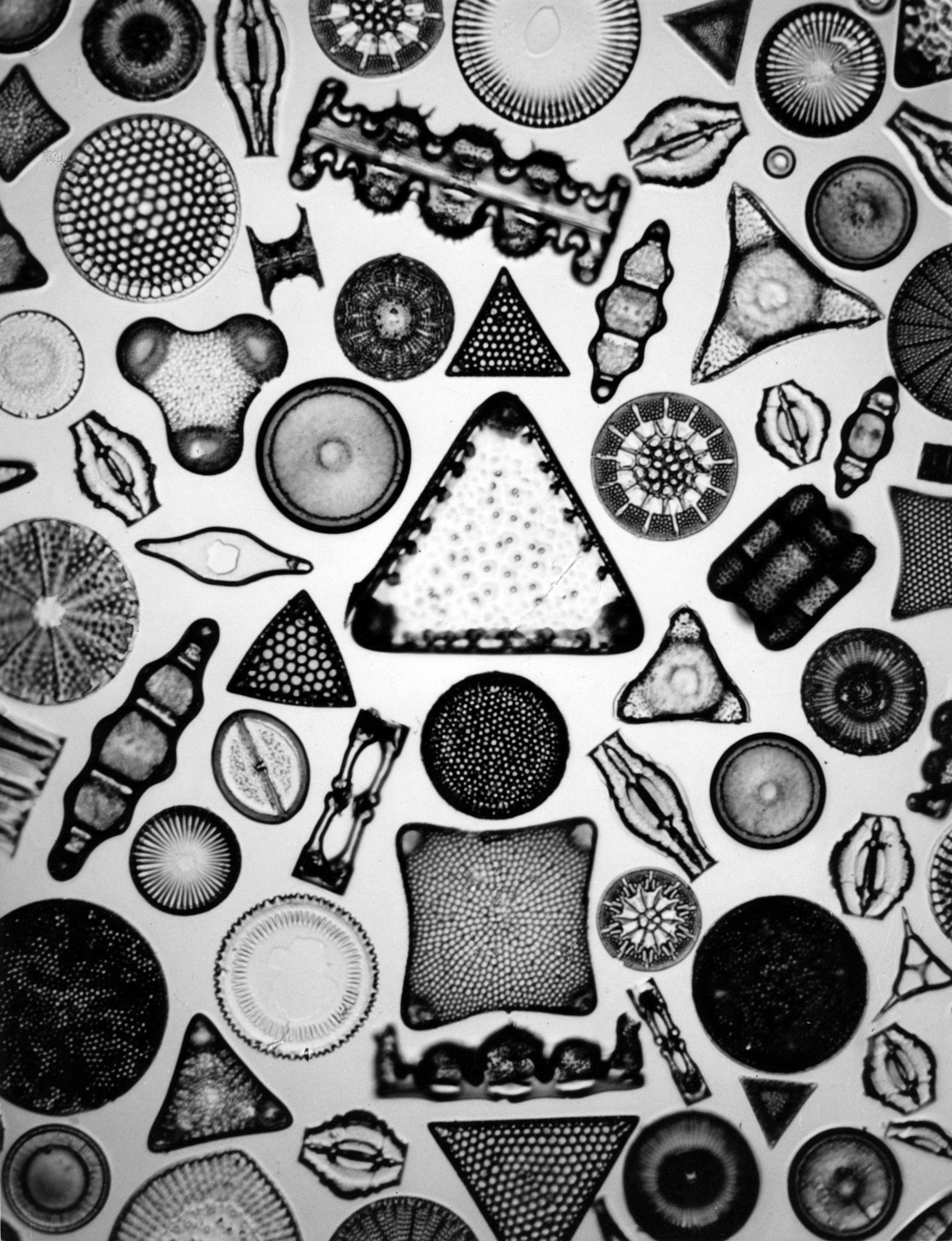 Carl Strüwe, Archetype of Individuality (1933). Courtesy Steven Kasher Gallery, New York 1 /2