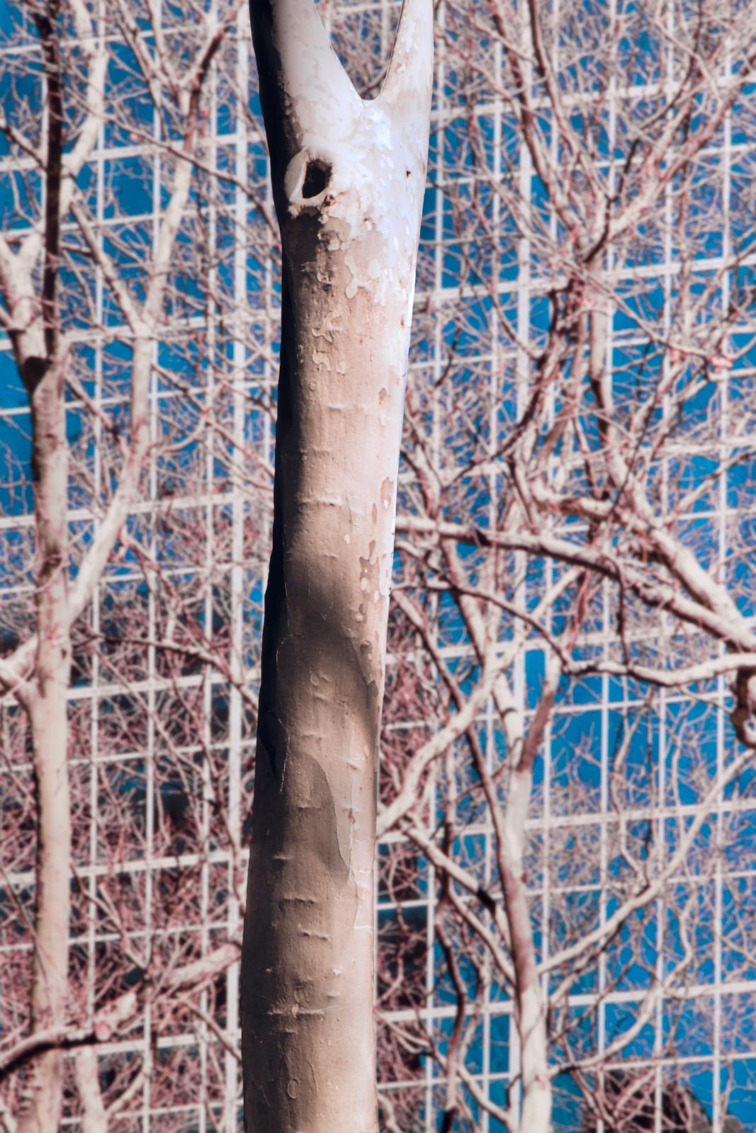 Nature Fabricated-04.jpg