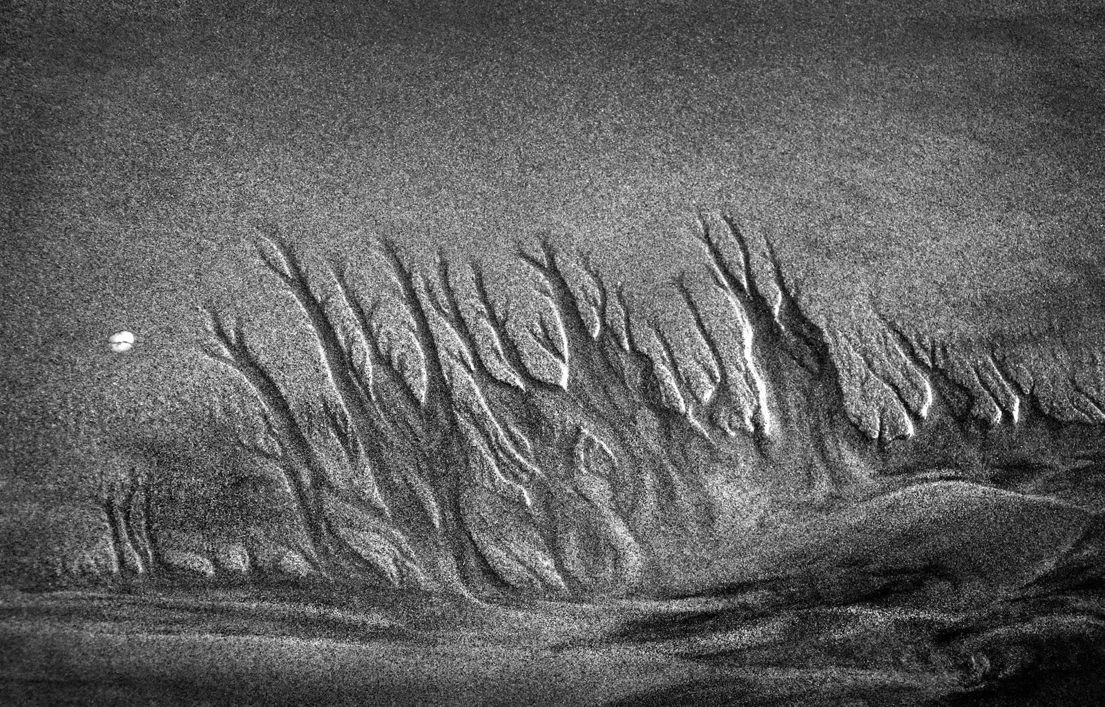 sandforestagainUNSHRP.jpg