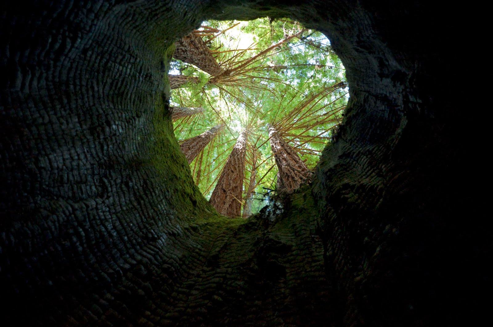 treepuddle copy.jpg