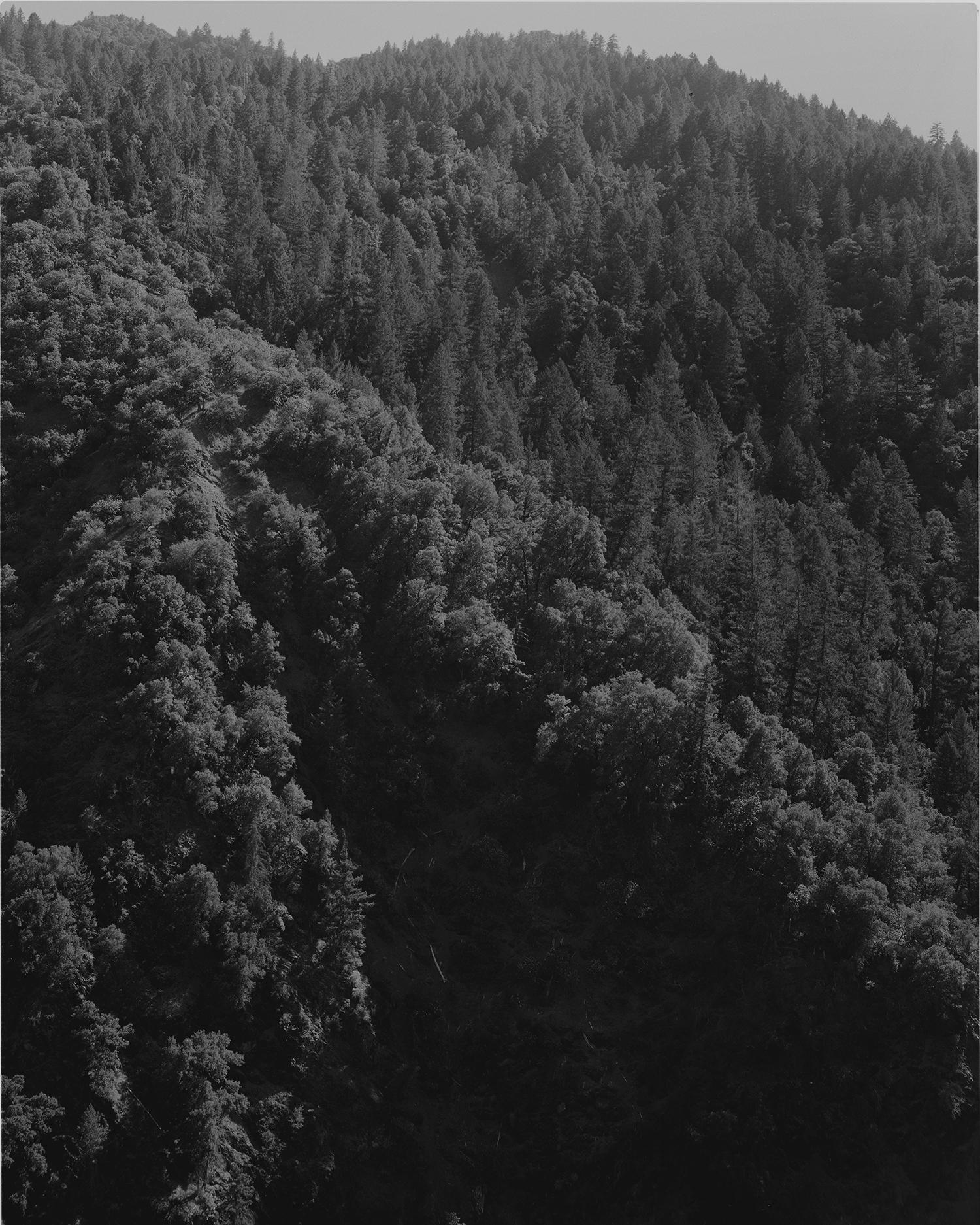 Richard Wilson's woods.