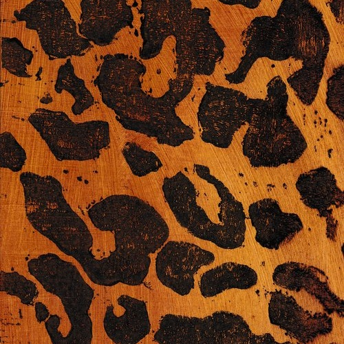 Leopard | Serengeti