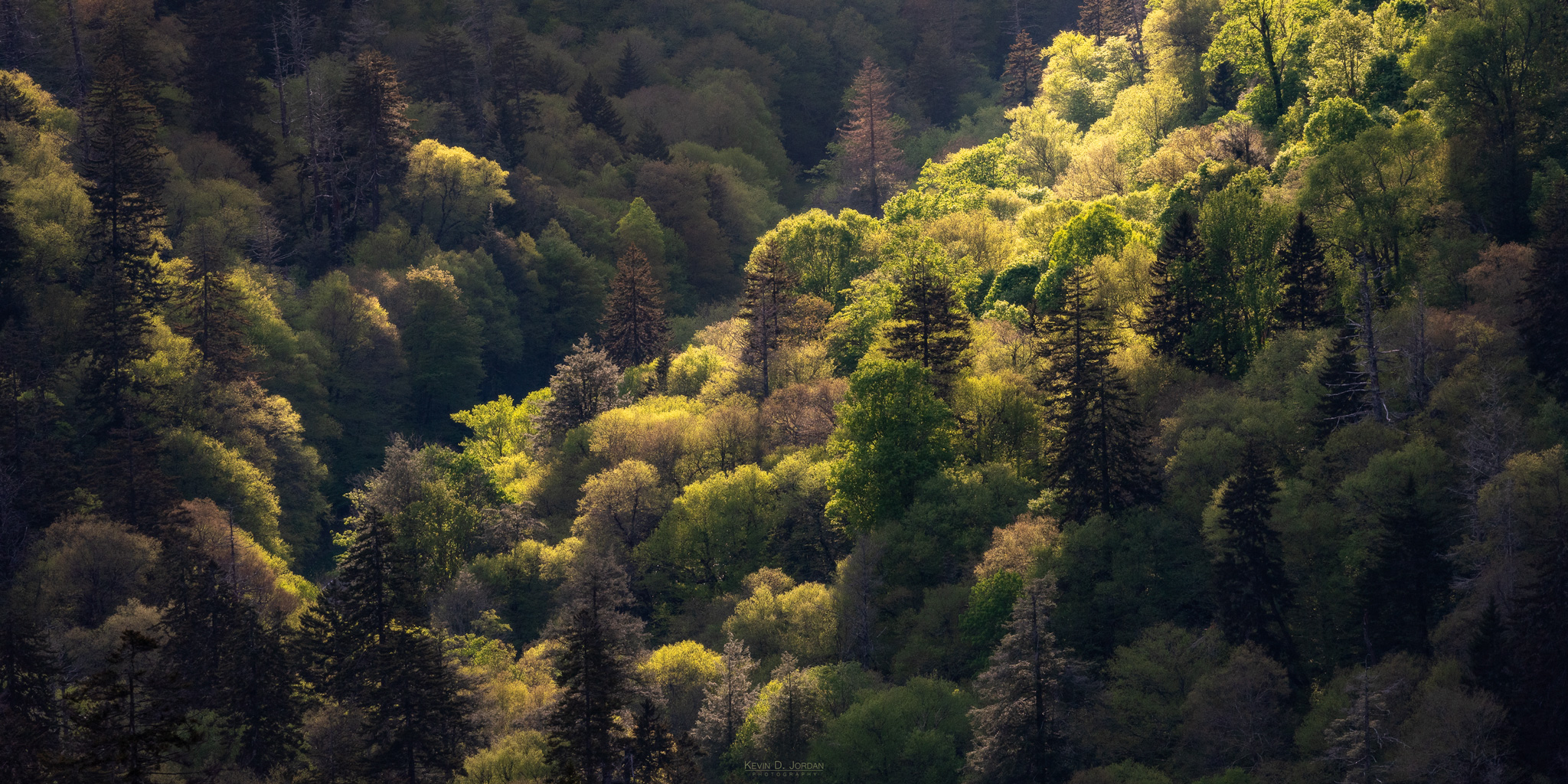 Late day sunlight illuminates the dense forest of Great Smokey Mountains National Park (© Kevin D. Jordan Photography)