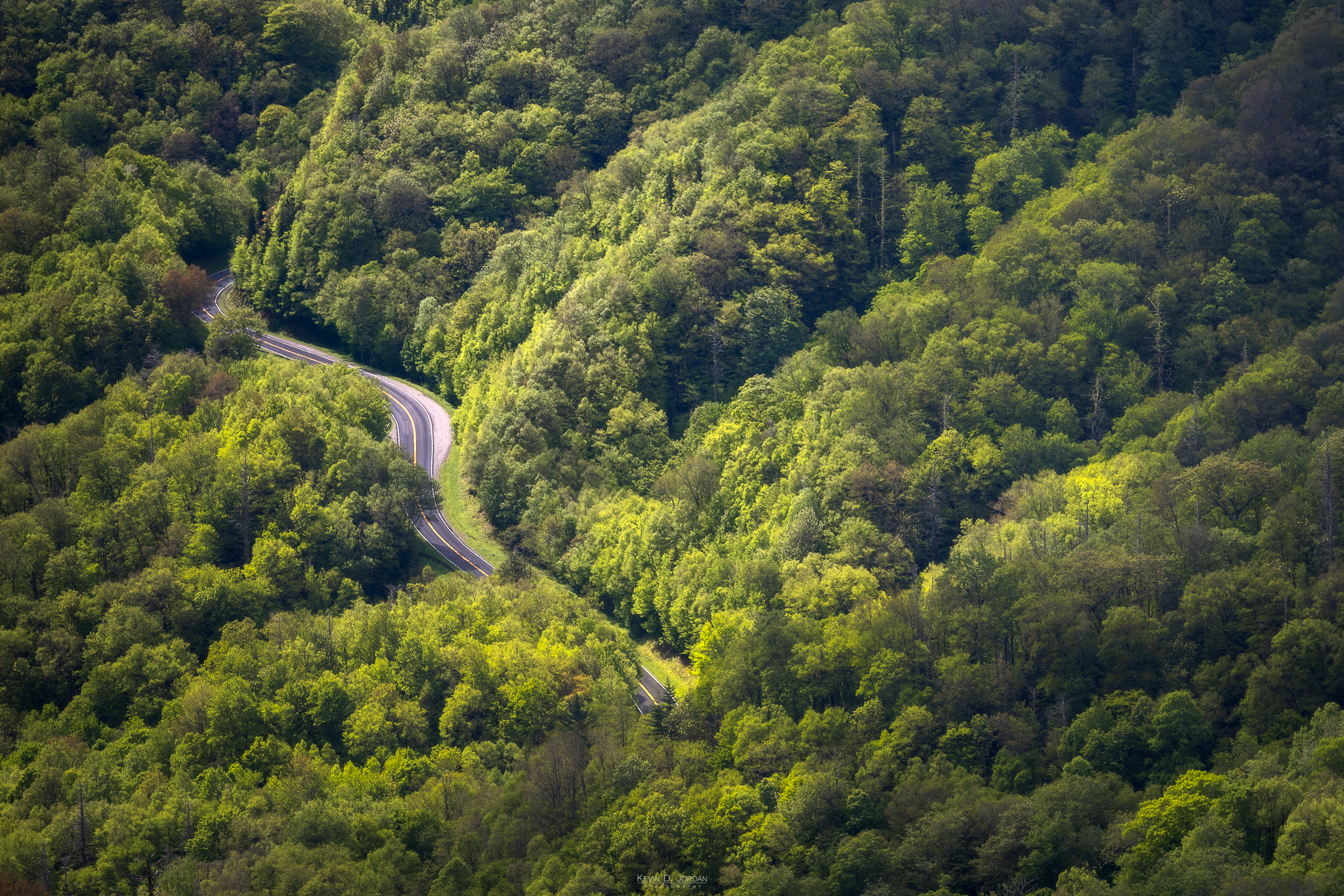 A road winds through the trees in Great Smoky Mountain National Park (© Kevin D. Jordan Photography)