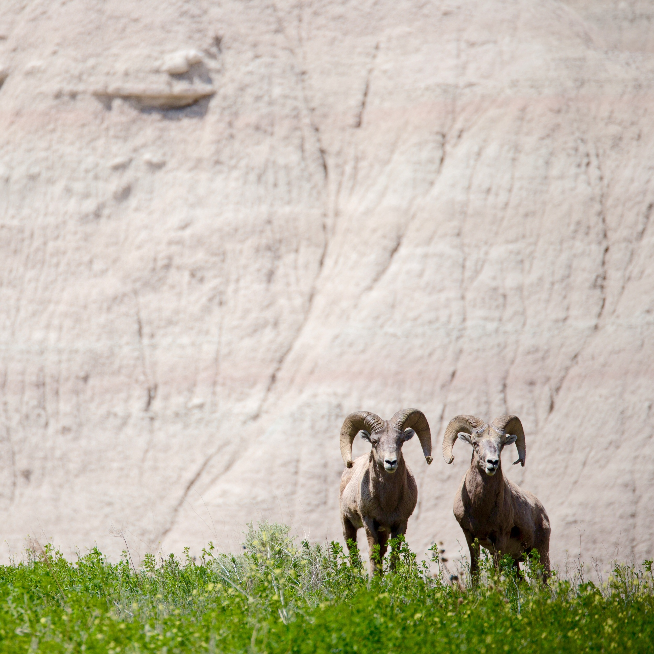 New friends in the Badlands