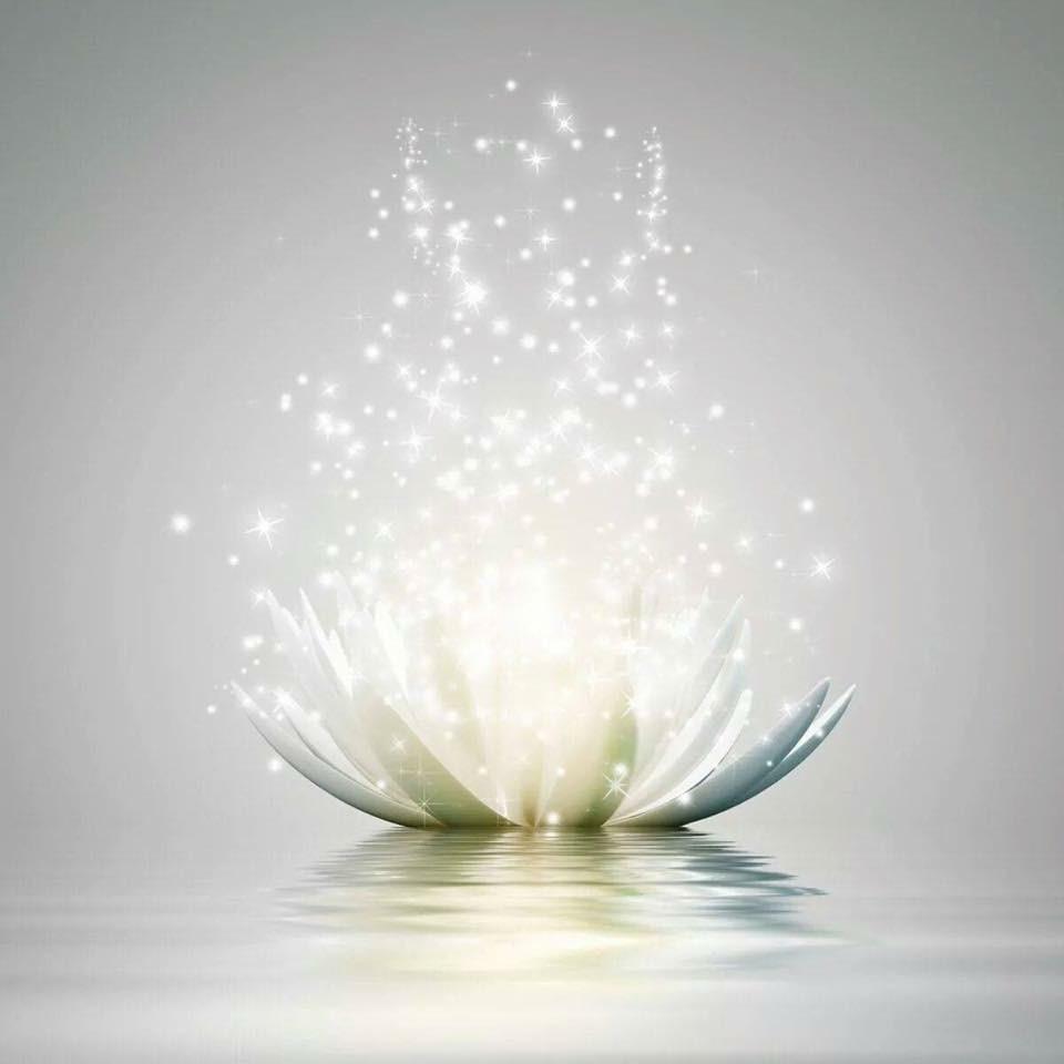 light+lotus+pic.jpg