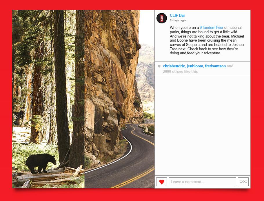 Sequoia_3.jpg