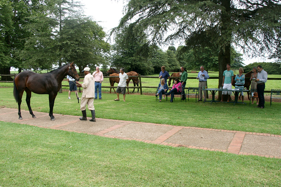 Viewing Yearlings