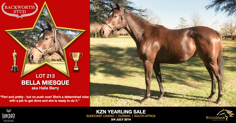 kzn yearling sale lot 213 bella miesque