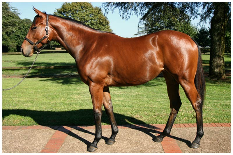 National Yearling Sale - Lot 351 - Thrill Factor - Windrush - Auburn Annio