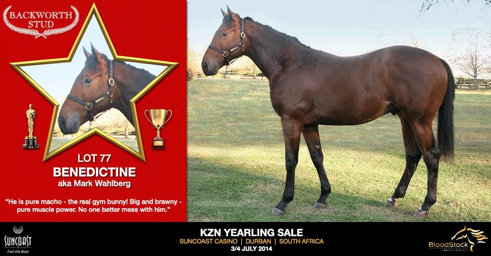 kzn yearling sale lot 77 benedictine