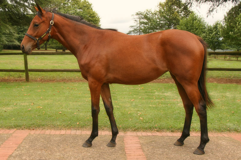 National Yearling Sale Lot 26 - Lady Matic - Muhtafal - Miss Unimac