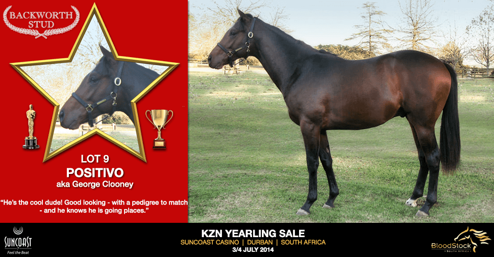 kzn yearling sale lot 9 positivo