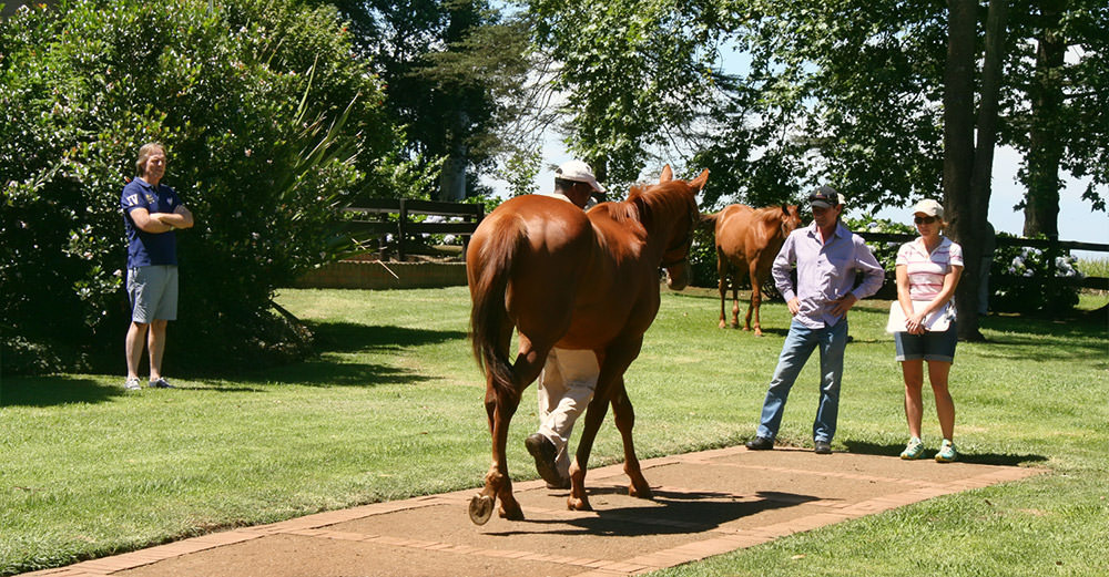 National Yearling Sale Judging 1