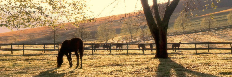 horse-paddocks-at-sunset.jpg