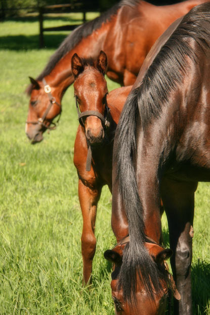fancy-flutter-kings-chapel-colt-foal.jpg