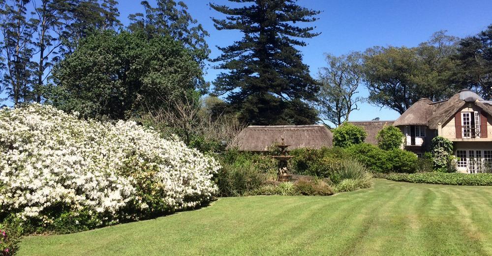 azaleas south africa