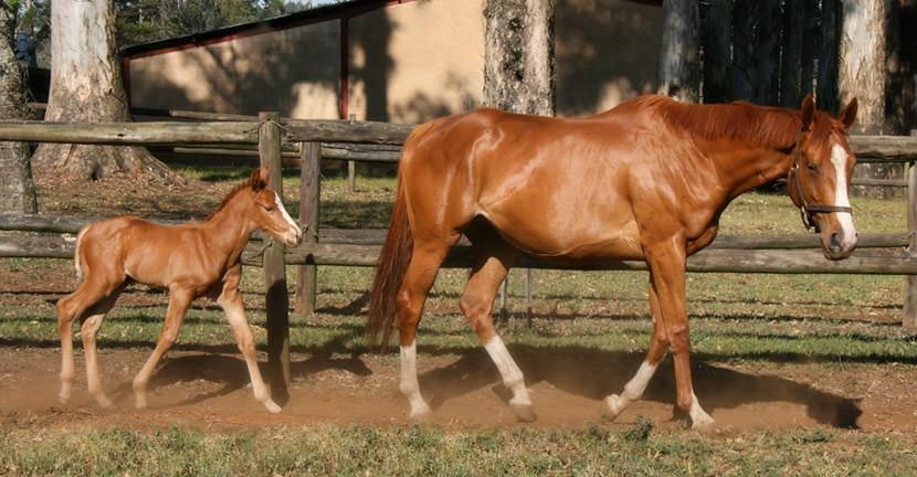 Golden Sword - Car Park Queen Colt Foal 3