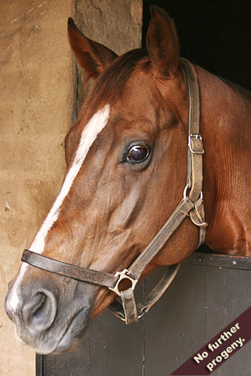 candy box, exclusive patriot, our caseys girl