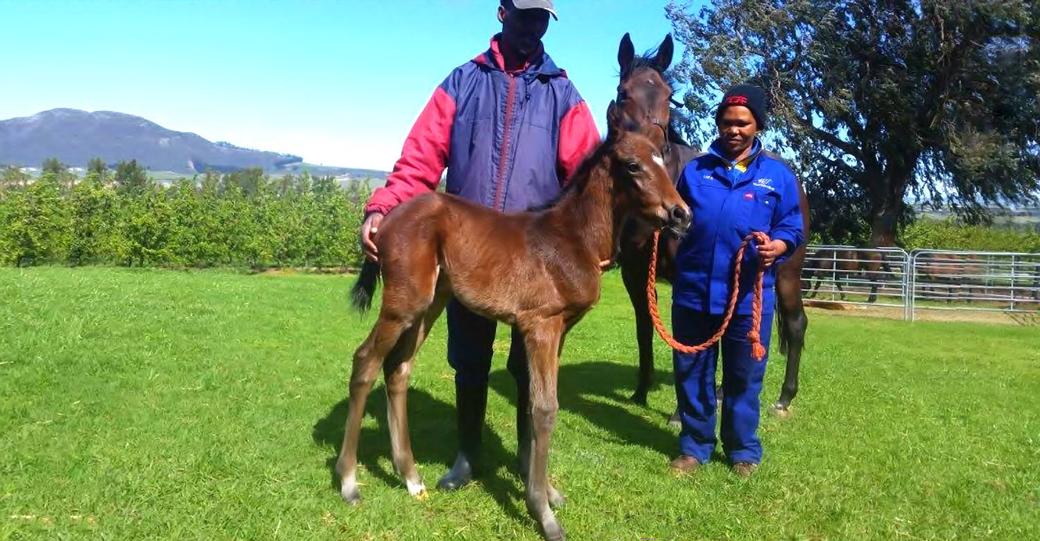 Filly Foal by Irish Flame out of Fancy Flutter