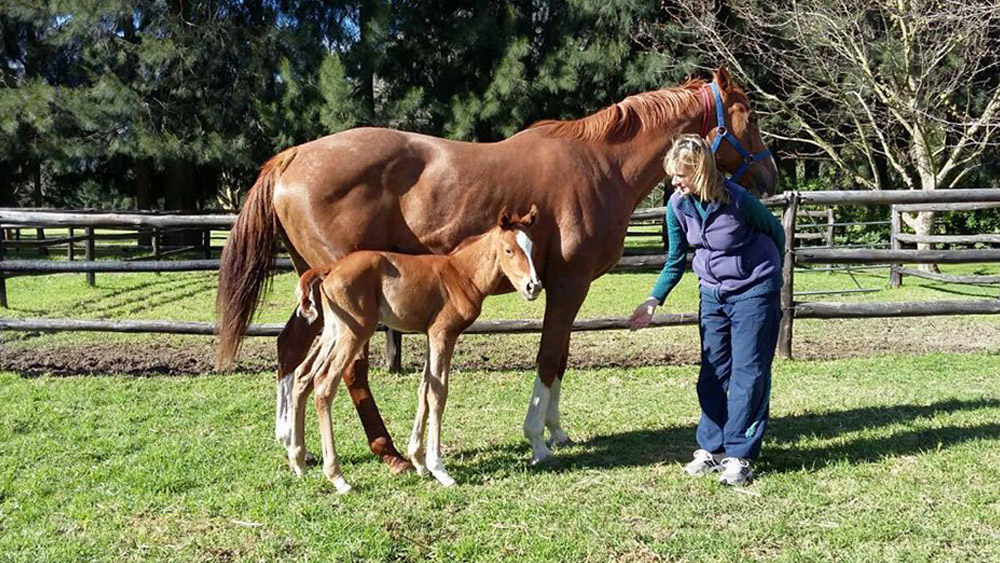 Filly Foal by Var out of Ballad For Annie