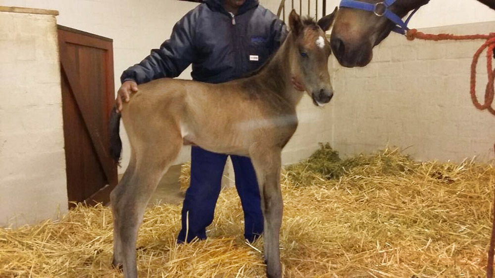 Filly Foal by Var out of Dancing Royale
