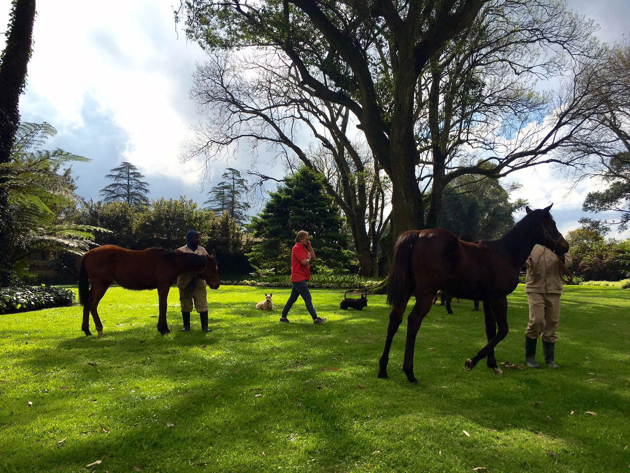 Yearling Inspection 9