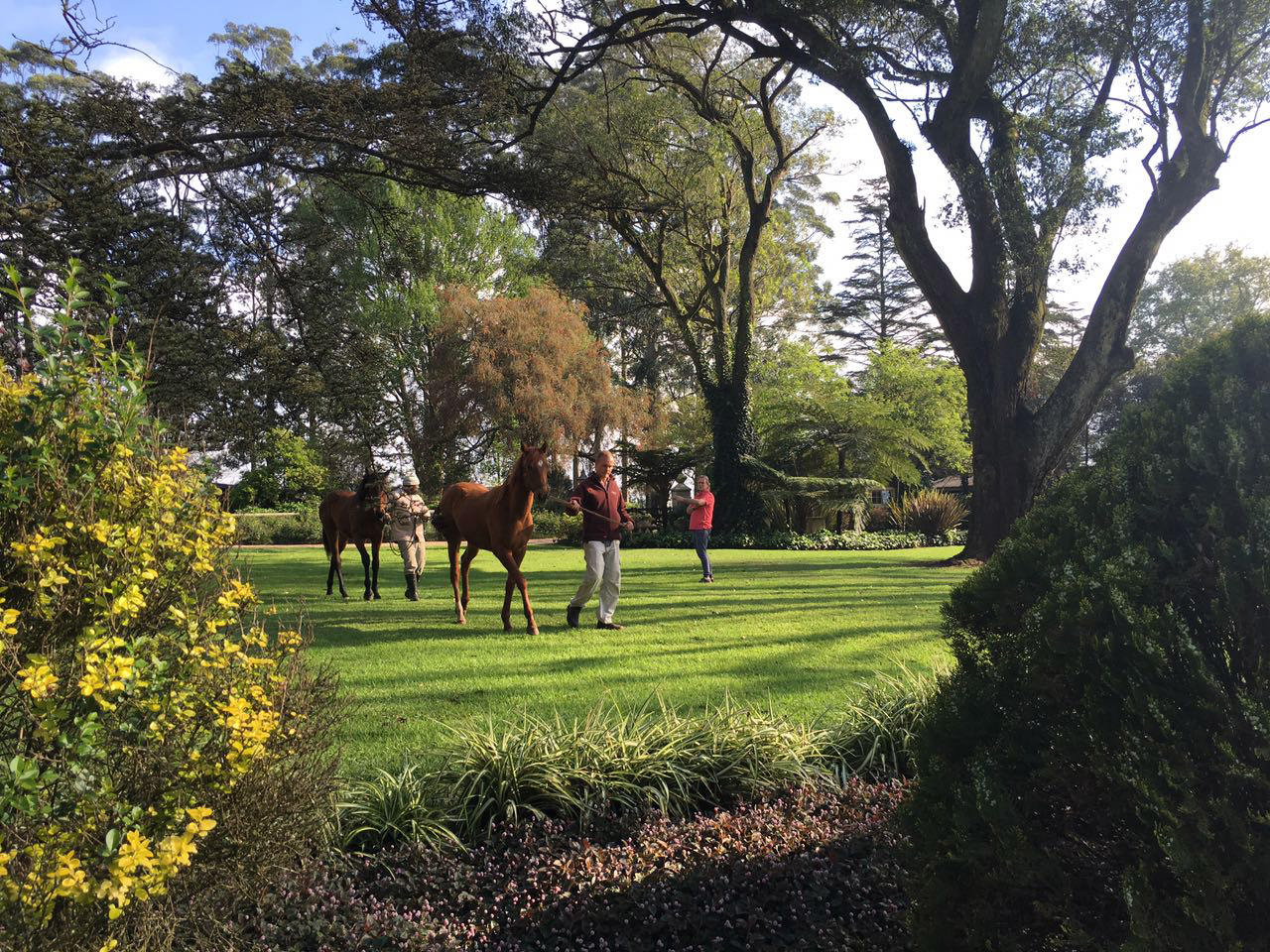 Yearling Inspection 7