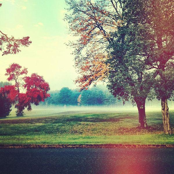 red-tree.jpg